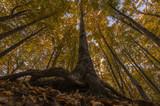 Bosco con grande albero visto dal basso durante la stagione autunnale