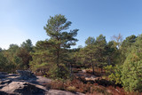 Gorges de Franchard in Fontainebleau forest