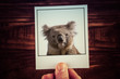 Male hand holding instant photograph of koala on wooden table background