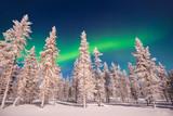 Northern lights, Aurora Borealis in Lapland, Finland - 226468662