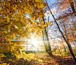 Leinwandbild Motiv Schönheit des Herbstes, Spätsommer, Indian Summer, wundervolle Farben im Wald, weiches, stimmungsvolles Licht :)