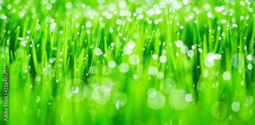 Fresh green grass with dew drops in sunshine on auttum and bokeh. Abstract blurry background. Nature background. Texture. copy space. - 226485897