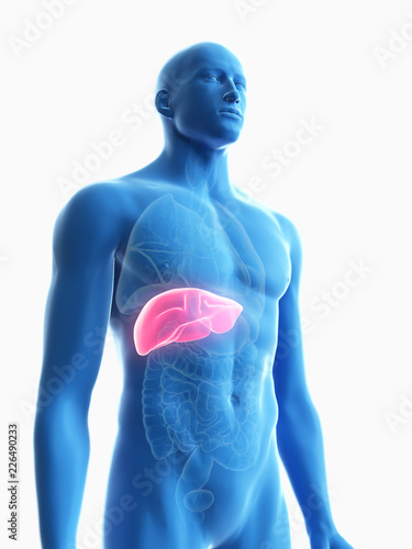 Leinwanddruck Bild 3d rendered medically accurate illustration of a mans liver