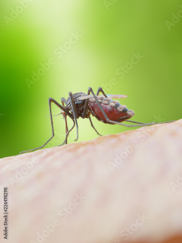3d rendered medically accurate illustration of a mosquito biting - 226498298