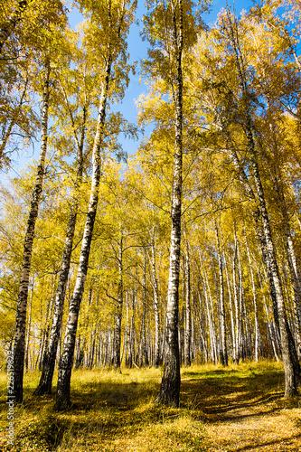 Autumnal Trees Landscape - 226519829
