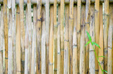 Old dry bamboo fence. Natural wood Architecture