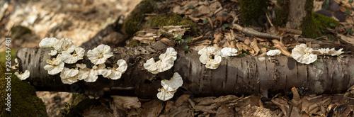 Panorama of the mushroom tree - 226547481