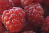 Large, juicy raspberries and blackberries