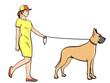isolated object on white background, summer color. A woman with a sports dress, walks a pet on a leash. Great Dane breed of domestic dog.