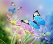 Beautiful blue butterfly and pink flowers. Summer and spring background