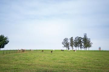 pasto na fazenda