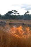 fire in the savannah