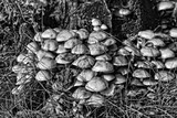 small delicate wild mushrooms growing in autumn on an old tree trunk - 226590804
