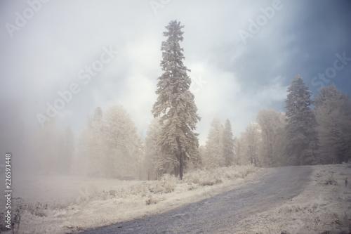 Foto Murales Summer landscape shot in the infrared range