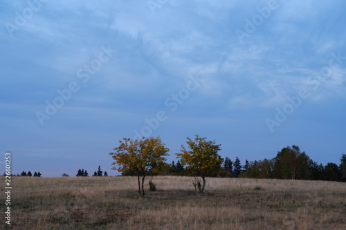 Landschaft Heide Bäume Wiesen Wolken