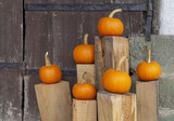 orange pumpkins - 226604235