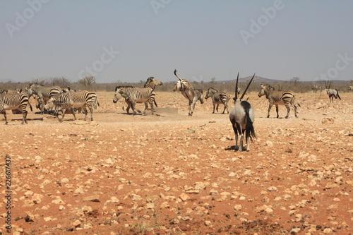 Point d'eau en afrique