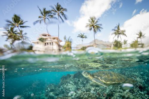 Fototapeten Strand Hawaiian Green Sea Turtle