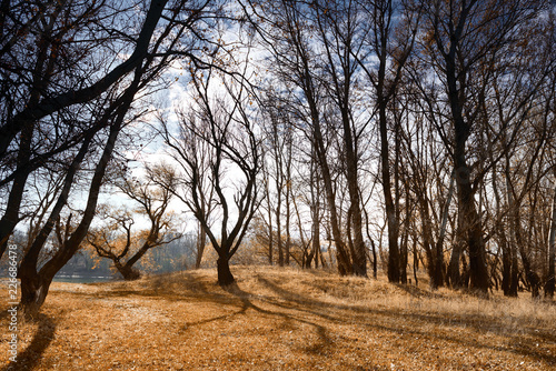 autumn forest, bright beautiful landscape, yellow leaves and trees - 226686478