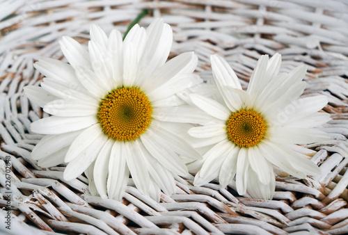 Foto Murales Flowers camomile