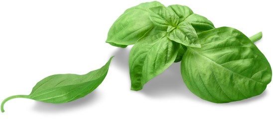 Fresh basil © BillionPhotos.com