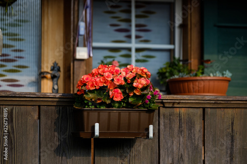 Foto Murales Typical Switzerland wooden house windows decorated by flower