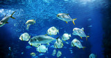 Picture of group of fish swimming underwater - 226758867