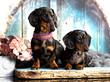 Leinwandbild Motiv Dachshund dog portrait