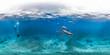 Leinwanddruck Bild - Diver with dolphins