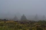 Irish Mist on Trees