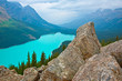 A high altitude view of Peyto Lake, Banff National Park.