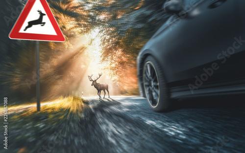 Leinwandbild Motiv Wild überquert Fahrbahn