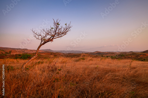 Foto Murales Barren Madagascan landscape at the end of the dry season.