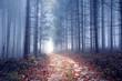 Foggy autumn season forest road. - 226867635