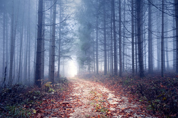 Foggy autumn season forest road. © robsonphoto