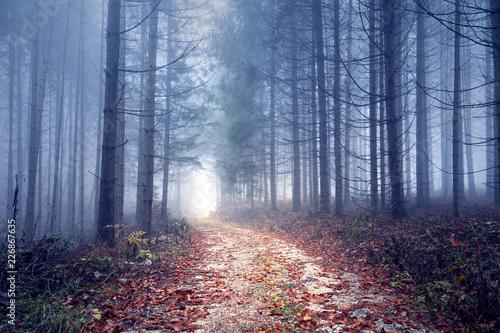 Foggy autumn season forest road.