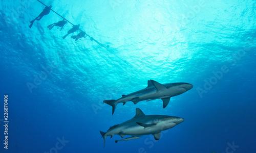 Fototapeta Two sharks from below