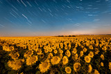 sunflowers field ant the nigh - 226878852