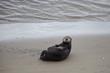 Quadro Moss Landing Otter