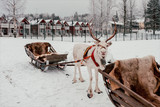 Deer and sledge in Finland - 226887603