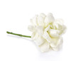 jasmine flower on white background.