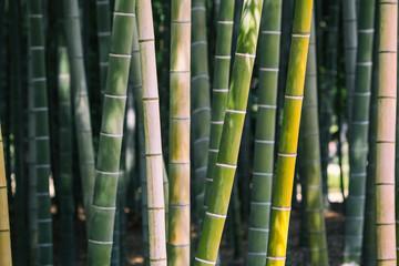 竹、日本 © kenzo