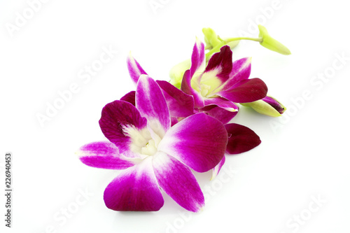 Thai Orchid flowers - 226940453