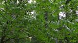 Breezy Trees One - 226982244