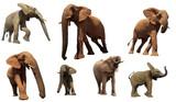 African Elephants isolated on white background