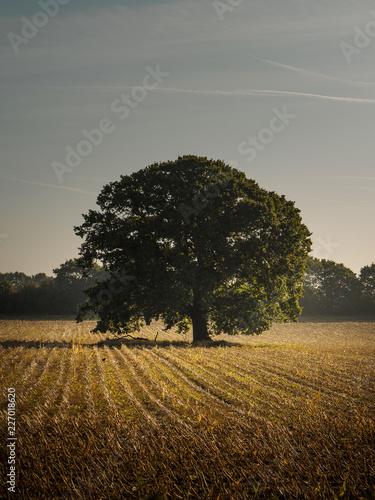 Foto Murales nature and landscape Hampshire UK