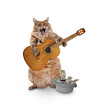 The big shaggy cat is very funny standing. - 227018838