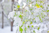 The first snow on the leaves of trees - 227026260
