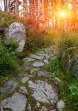 pathway in green forest - 227034476