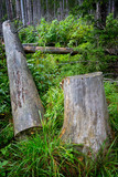 wooden stump and log in forest - 227034602